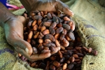 The cocoa farmers in Ghana need your help!